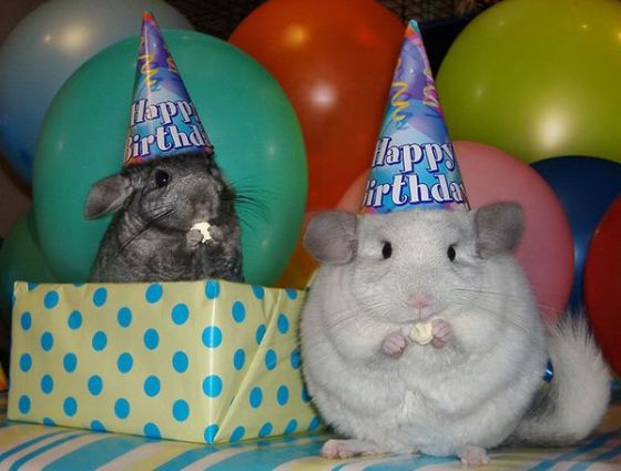 77395488_happy_birthday_animals_10